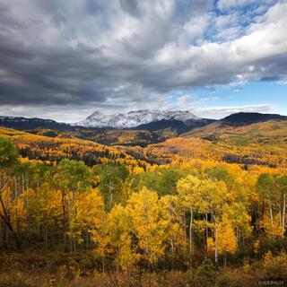 Fall Creek Aspens
