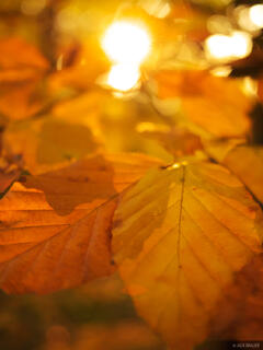 autumn, leaves, freiburg, Germany