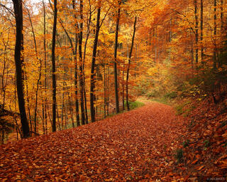 Freiburg, Germany, autumn, road, Black Forest