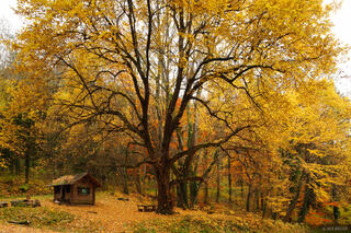 yellow, tree, Freiburg, Germany, Black Forest