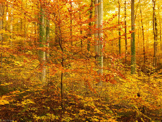 autumn, forest, Freiburg, Germany, Black Forest