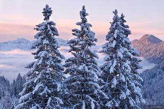 San Martino, Mezzano, snowy, trees, italy