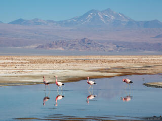 Atacama,Chile,Laguna Chaxa,flamingos, South America, San Pedro