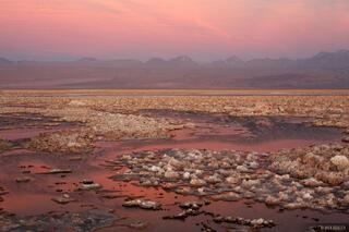 Laguna Chaxa Sunset #2