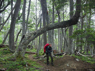 Chile, Isla Navarino, South America, Tierra del Fuego, forest, hiking