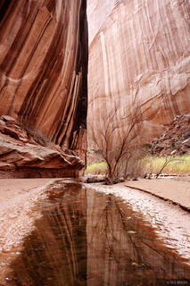 Robbers Roost Canyon, Utah, reflection, march