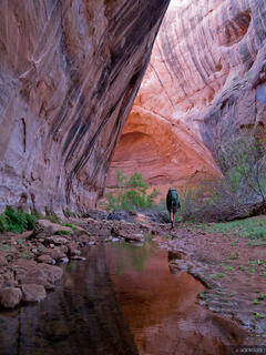 Sleepy Hollow, Coyote Gulch, Utah, Escalante, hiking, canyon, Grand Staircase-Escalante National Monument
