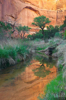 Owl Creek Canyon, Cedar Mesa, Utah, cottonwood, reflection, Bears Ears National Monument