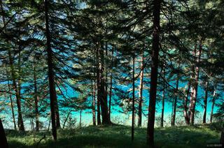 Eibsee Trees