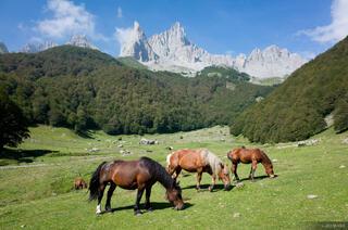 Pyrenees, horses
