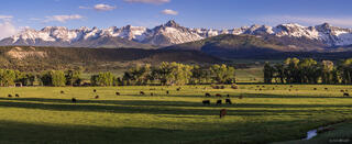 Colorado,San Juan Mountains,Sneffels Range, Pleasant Valley, panorama, cattle, Ridgway