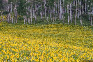 Colorado,San Juan Mountains,wildflowers