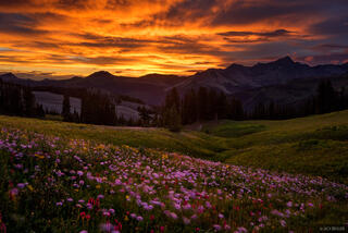 Colorado,Grizzly Peak,San Juan Mountains,wildflowers, sunset