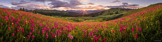 Colorado,Engineer Mountain,San Juan Mountains,wildflowers, panorama, sunrise