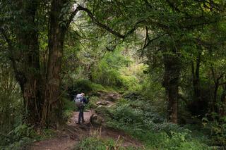 Annapurna Forest Hiker
