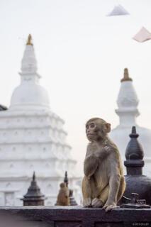 Asia,Kathmandu,Nepal,Swayambhunath,monkey