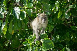 Ko Phi-Phi,Thailand,monkey