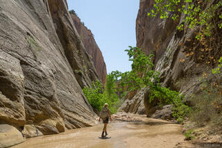 Lower Hackberry Canyon