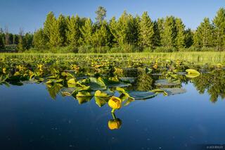 Lily Lake,Uintas,Utah,wildflowers
