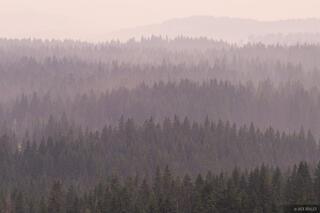 Durmitor Rainy Forest
