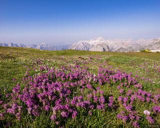 Albania,Maja Jezerce,Bjeshkët e Namuna,Prokletije,wildflowers, Kollata e Keqe, Zla Kolata