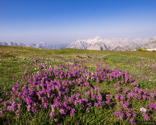 Maja Jezerce Wildflowers