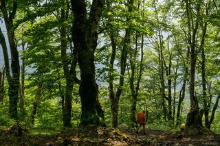 Thethi Forest