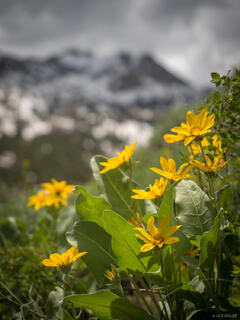 Lamoille Canyon, Nevada, Ruby Mountains, wildflowers