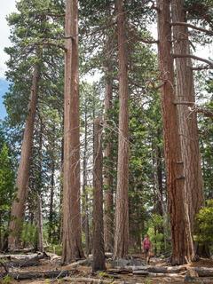Emerald Bay Pines