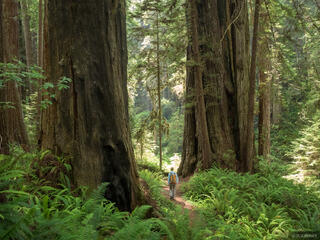 Prairie Creek Redwoods 2