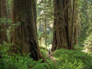 Prairie Creek Redwoods 2