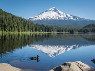 Mount Hood, Oregon, Trillium Lake, duck
