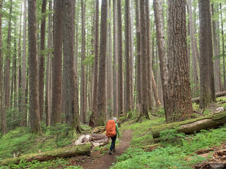 Olympic Peninsula, Sol Duc, Washington, Olympic National Park, hiking