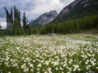 British Columbia, Canada, Height of the Rockies, truck, wildflowers