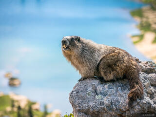 British Columbia, Canada, Canadian Rockies, Height of the Rockies, Limestone Lakes, marmot, BC