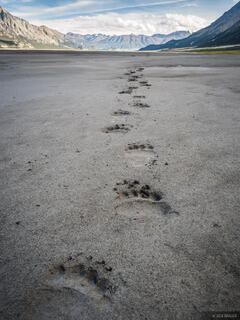 Canada, Kluane National Park, Slims River, Yukon, bear