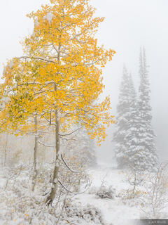 Guardsman Pass, Utah, Wasatch Range, aspens
