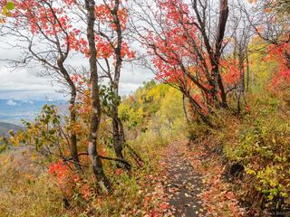 Guardsman Pass, Utah, Wasatch Range, aspens, autumn