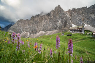 Austria, Falkenhütte, Karwendel, Alps, wildflowers