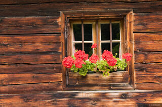 Austria, Engalm, Karwendel, Alps, flowers, window
