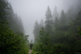 Misty Hiking