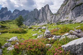 Austria, Dachstein, wildflowers