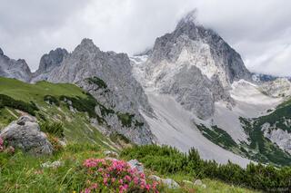 Austria, Dachstein, wildflowers, Torstein