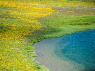 Colorado, Flat Tops, wildflowers
