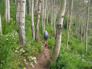 Colorado, Gore Range, aspens, Eagles Nest Wilderness, trail
