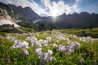 Colorado, Gore Range, columbine, wildflowers, Eagles Nest Wilderness