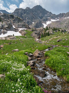 Colorado, Gore Range, wildflowers, Eagles Nest Wilderness