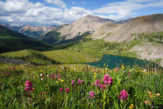 Collegiate Peaks Wilderness, Colorado, Huron Peak, Lake Ann, Sawatch Range, wildflowers