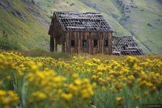 Animas Forks, Colorado, San Juan Mountains, mine, wildflowers, California Gulch