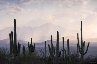 Arizona, Saguaro National Park